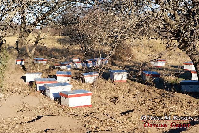 Bee Hive Homes