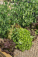 Deer fencing with netting fence for vegetable garden to deter animal pests