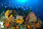 Spectacular Dominican seascape in Soufriere marine park, with various sponges and fish