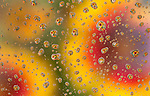 Blanket Flower Refraction