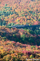 Aerial shot of Northern Ontario forest in autumn showing fall colours.