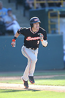 Caleb Hamilton (14) of the Oregon State Beavers runs to first base during a game against the UCLA Bruins at Jackie Robinson Stadium on April 4, 2015 in Los Angeles, California. UCLA defeated Oregon State, 10-5. (Larry Goren/Four Seam Images)
