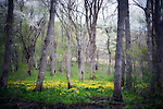 Meadowland in the C.W. Nicol Afan Woodland Trust, native woodland that author and naturalist C.W. Nicol began buying up 25 years ago, near his home in Kurohime, Nagano Prefecture, Japan on 10 May 2010..Photographer: Robert Gilhooly