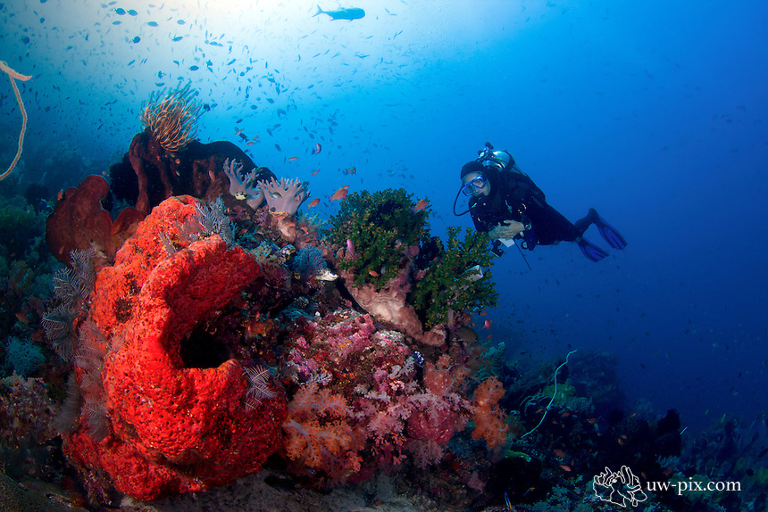 female diver with some giant sponges at Komodo National Park