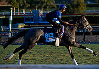 Outstrip, trained by Charlie Appleby, trains for the Breeders' Cup Juvenile Turf at Santa Anita Park in Arcadia, California on October 30, 2013.