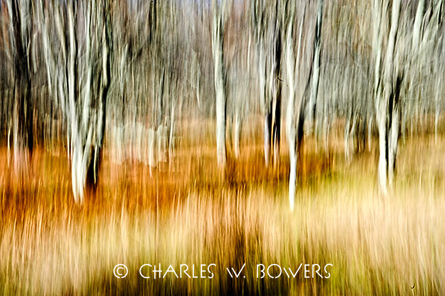 Color In Motion<br /> <br /> -Limited Edtion of 50 Prints