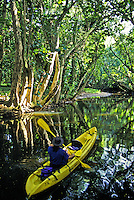 Kayaker paddles fork of the Wailua River, Kauai