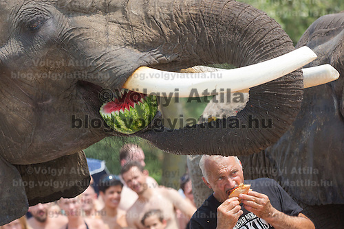 Rene Caselly trainer from Germany and the circus elephant of the Caselly Family eat watermelon together on a beach of lake Balaton in promotion of the Circus Night event at Balatonlelle (about 140 km South-West of capital city Budapest), Hungary on July 18, 2015. ATTILA VOLGYI