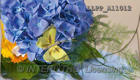 Maira, FLOWERS, studio, photos, LLPP, LLPPA11012,#F# Blumen, flores