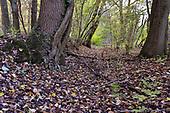 Ancient woodland boundary, Stoke Wood, Oxfordshire