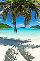 Palm trees at Maho Bay<br /> Virgin Islands National Park<br /> St. John, U.S. Virgin Islands