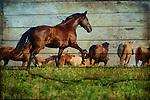 2016 Horse