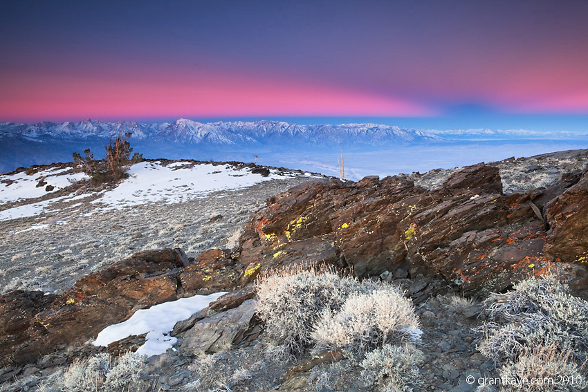As the sun rises above an ancient bristlecone pine, the shadow of the earth is cast into the alpenglow above the summits of the eastern Sierra Nevada mountains, west of Bishop, California.