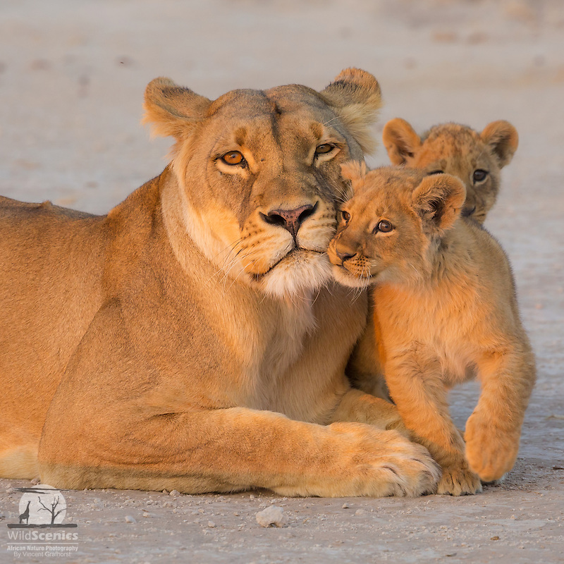 'Mom is the Best!'<br />
