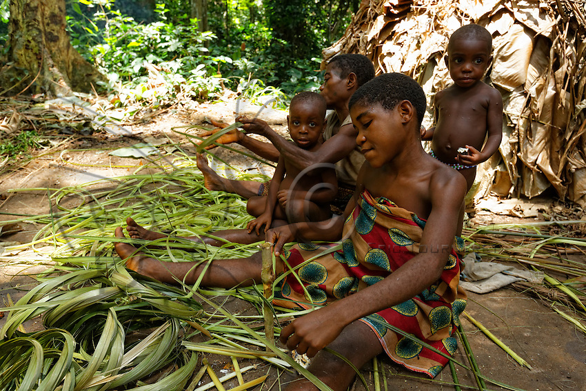 The stalks of Marantaceae are used for basketry, for making the traditional baskets and mats that will be sold to the Bantus.///Les tiges de Marantaceae  sont utilisées pour la vannerie, pour les paniers traditionnels et pour la fabrication de nattes qui seront vendus aux bantous.