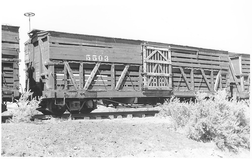 Stock car #5503 at Alamosa.<br /> D&amp;RGW  Alamosa, CO  Taken by Maxwell, John W. - 9/3/1966