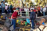 A rubber duck annual charity event in Sun City, Arizona, an age-restricted city of more than 40,000 retirees, December 2011.