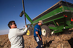 Mitchell Baalman, right, and his sister, Keyna Baalman, prepare to transport the milo harvest on the family's 12,000-acre farm outside of Hoxie, Kan., on Thursday, Oct. 11, 2012. As historically dry conditions continue, farmers from South Dakota to the Texas panhandle rely on the Ogallala Aquifer, the largest underground aquifer in the United States, to irrigate crops. After decades of use, the falling water level ? accelerated by historic drought conditions over the last two years ? is putting pressure on farmers to ease usage or risk becoming the last generation to grow crops on the land. Farmers like Mitchell Baalman and Brett Oelke (not pictured), are part of a farming community in in Sheridan County, Kansas, an agricultural hub in western Kansas, who have agreed to cut back on water use for crop irrigation so that their children and future generations can continue to farm and sustain themselves on the High Plains.