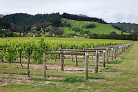 Vineyards near Gisborne, north island, New Zealand.