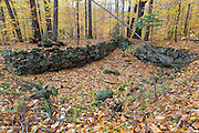 Remnants of an abandoned cellar hole at Thornton Gore in Thornton, New Hampshire during the autumn months. Thornton Gore was the site of an old hill farming community that was abandoned during the 19th century. Based on an 1860 historical map of Grafton County this is believed to have been the P.P. Merrill homestead.