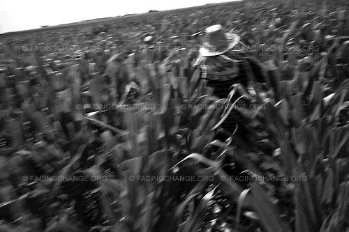 Rantoul, Illinois <br /> August,  2011<br /> <br /> Migrant workers mostly from Rio Grande, Texas. Come to Rantoul, Illinois. To work the cornfields. Most of the workers are Mexicans who live in the United States and migrate from Texas to work the fields. Many of these workers work under extreme situations. Some get sick from pesticides, others end up injured while working under extreme hot weather conditions and some and up dying on the job.