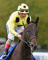 Ace Ventura ridden by Andrea Atzeni goes down to the start of The PKF Francis Clark EBF Novice Stakes        during Afternoon Racing at Salisbury Racecourse on 4th October 2017