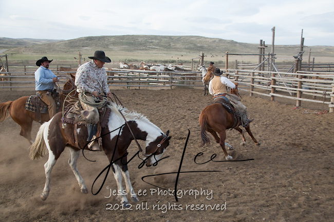 old spot Cowboys working and playing. Cowboy Cowboy Photo Cowboy, Cowboy and Cowgirl photographs of western ranches working with horses and cattle by western cowboy photographer Jess Lee. Photographing ranches big and small in Wyoming,Montana,Idaho,Oregon,Colorado,Nevada,Arizona,Utah,New Mexico.