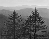 &quot;Family Of Trees&quot; <br /> Great Smoky Mountains National Park, North Carolina<br /> <br /> This image makes me imagine a &quot;family&quot; of trees that includes a &quot;father,&quot; &quot;mother&quot; and &quot;child.&quot; The photograph was recorded from a pullout at high elevation on Clingmans Dome Road. The day was quite hazy and a medium yellow filter was used to reduce atmospheric haze somewhat but leave enough haze to contribute to the sense of depth in the photo.