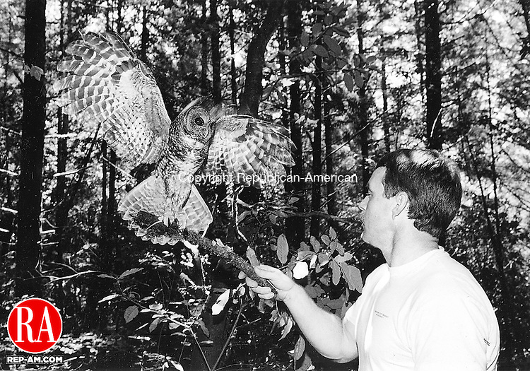 1990's - A bird handler has a northern spotted owl spread its wings while balancing on a branch. Republican-American Archives