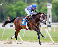 OLDSMAR, FL - MARCH 10: Ruler of the Nile #3, ridden by John Velazquez, breaks his maiden on Tampa Derby Day at Tampa Bay Downs on March 10, 2018 in Oldsmar, FL. The three year-old son of Pioneerof the Nile was purchased for $1,000,000 in 2017 at the Ocala Breeder's Sales. (Photo by Scott Serio/Eclipse Sportswire/Getty Images)