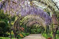 France, Cher (18), Apremont-sur-Allier, labellisé Plus Beaux Villages de France, Parc Floral d'Apremont-sur-Allier, tonnelle de glycines en fleurs