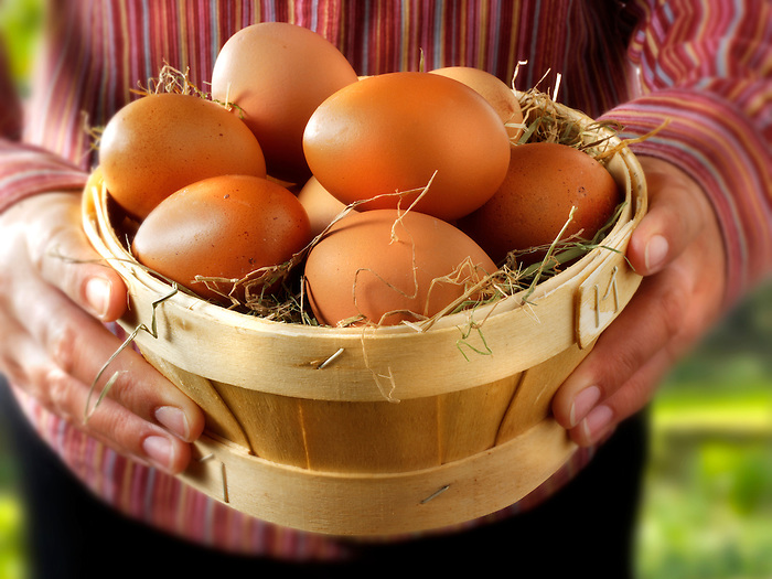 Basket of Fresh Burford Brown free range organic Eggs