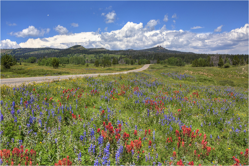 Along a road off of Highway 40 near Steamboat springs, I found the roadsides covered in reds and blues in mid-July. The lupine and paintbrush were everywhere, and the opportunity to capture Colorado wildflower images was abundant. These pictures came late in the day as the moon was prominent in the sky.