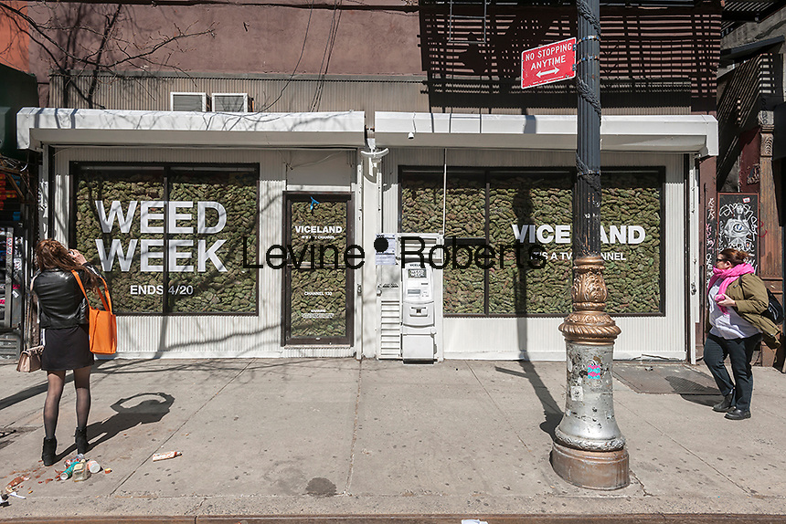 "Two storefronts in the Lower East Side neighborhood of New York are filled with ""faux"" marijuana on Wednesday, March 29, 2017 as a promotion for the so-called ""Weed Week"" programming on the Viceland television channel. The celebration of all things marijuana takes place on the Viceland cable channel from April 17-20. April 20 is known as 420 in cannabis culture and is a holiday for smoking marijuana, especially at 4:20 AM or PM. (© Richard B. Levine)"