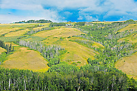 Scenic in the Peace River Valley<br />