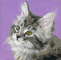 Portrait of long haired tabby kitten