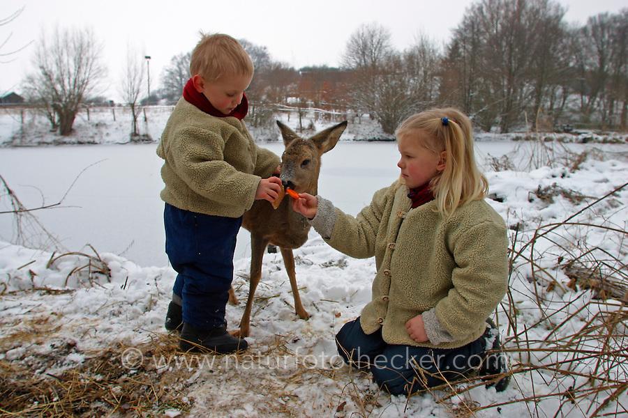 Kinder füttern zahmes Reh im Winter, Capreolus capreolus, Portrait Weibchen, Ricke, roe deer