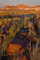 Petrified log and setting moon<br />
