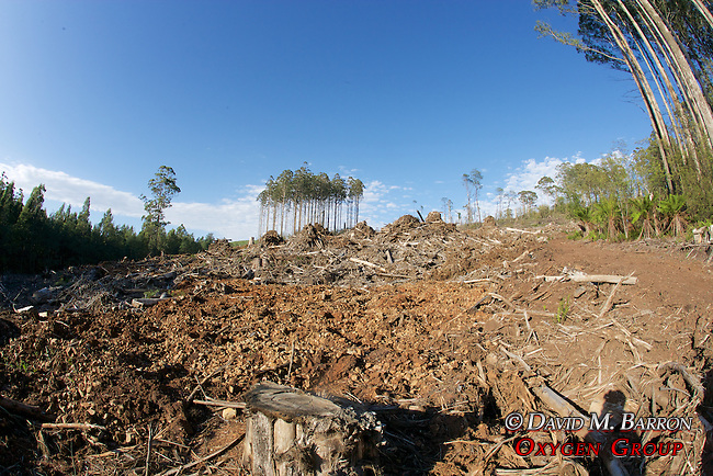 Logging Coupe With Habitat Island