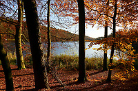 Schmalsee, Herst, herbstlich, Lauenburgische Seenplatte, bei Mölln, Herzogtum Lauenburg, Schleswig-Holstein, Norddeutschland, Deutschland