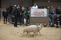 &copy;Tim Scrivener Photographer 07850 303986<br /> ....Covering Agriculture In The UK....