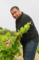 Pierre Quinonero Domaine de la Garance. Pezenas region. Languedoc. Vines trained in Gobelet pruning. Vine leaves. Owner winemaker. France. Europe. Vineyard.
