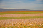 Autumn fields. Union County.