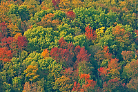 AUtumn colors in hardwood forest at Hope Bay on Georgian Bay (Lake Huron). Bruce Peninsula.<br />