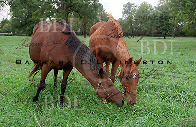 Chateaucreek produced Epsom Derby winner Henbit.  her daughter Chateaubaby is the mother of multiple Grade 3 winner Fantastic Fellow.  Mineola Farm, 2002