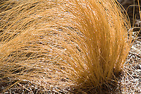 Dry grasses in the wind at Joshua Tree National Park