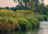 Nippersink Creek flows through a grassland in Late Summer Light. Glacial Park, McHenry County, Illinois