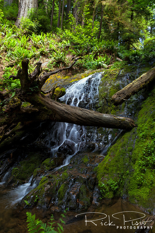 Fern Falls at the end of the Boy Scout Trail in Jedediah Smith Redwoods State Park.