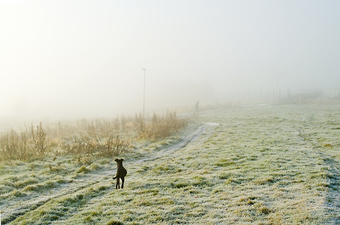 A dog watches a man walking in fog on a frosty morning in Brighton. England 2007.