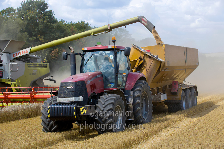 Harvesting wheat with Lexion combine & loading chaser bin - Cambridgeshire, August